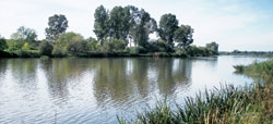 Contaminantes en el agua