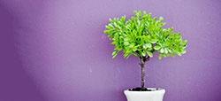 Cómo evitar que tus plantas sufran en verano