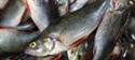 ¿Dejamos el pescado por culpa del mercurio?