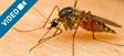 Las apps antimosquitos no valen de nada