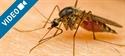 Las apps antimosquitos no valen para nada