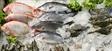 Pescado: la variedad es salud