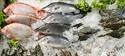 Más pescados, menos riesgo: la variedad es salud