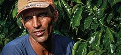 Producción de café: mejoras aún insuficientes