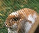 Carne de conejo: muy recomendable